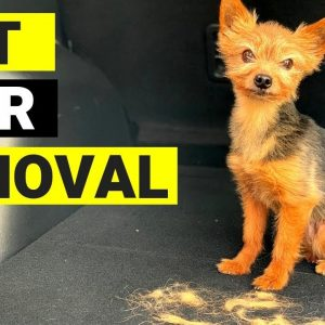 HOW TO REMOVE PET HAIR FROM CAR : QUICK & EASY !!!