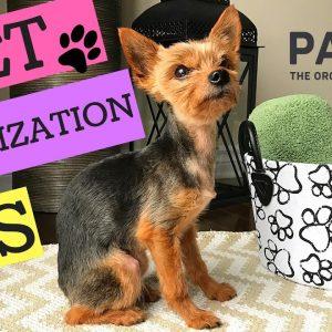 PET ORGANIZATION TIPS !!